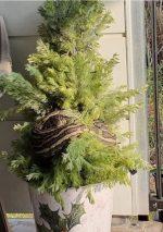 Mujer encuentra una pitón de más de 3 metros en su árbol de Navidad