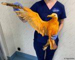 Creyeron que eran una  extraña especie de ave, y resultó ser una gaviota bañada en curry