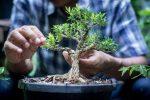 Le explicaron a los ladrones como cuidar sus bonsáis valorados por más de 100 mil dólares