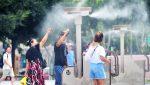 VIDEO: China legaliza el comercio de productos de tigre o rinoceronte