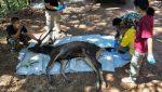 FOTOS | Encuentran un ciervo muerto con 7 kilos de basura en el estómago