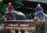 VIDEO: elefante exige que su cuidador que juegue con él golpeándolo