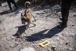 VIDEO: desaparecer buscando desaparecidos, doble tragedia mexicana
