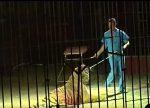 Cuatro tigres matan a domador y juegan con sus restos