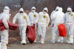 Fiebre porcina se extiende en Japón, autoridades sacrificarán 15.000 animales