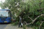 Más de 100 muertos en India y Bangladés tras paso del ciclón Amphan