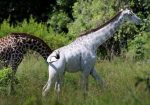 Matan a la única jirafa blanca hembra de Kenia
