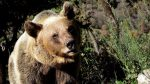 VIDEO: Captan a un enorme oso corriendo por las calles de una ciudad en Rusia