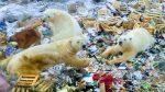 Una 'masiva invasión' de osos polares atemoriza a una comunidad en Rusia