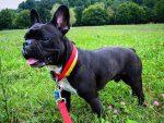 VIDEO: un pequeño perro sorprende por su ingeniosa manera de escapar