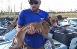 Hallado vivo en Bahamas un perro debajo de edificio un mes después de huracán Dorian