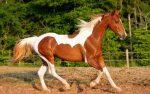 Indignación por el desplome de un caballo por pesada carga