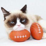 """Adiós """"Grumpy Cat"""" una celebridad de los memes en internet"""