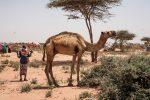 45 millones de personas amenazadas por la sequía en África austral