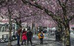 Suecia registra en abril el mayor número de muertes desde 1993