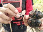 FOTOS | Hallan una tortuga deformada por crecer con una banda elástica alrededor de su cuerpo