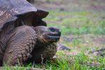 Realizan censo a tortugas de Islas Galápagos
