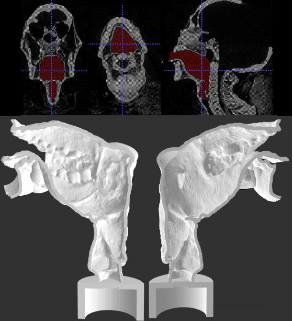 Impresión 3D del tracto vocal de la momia Nesyamun (David Howard)