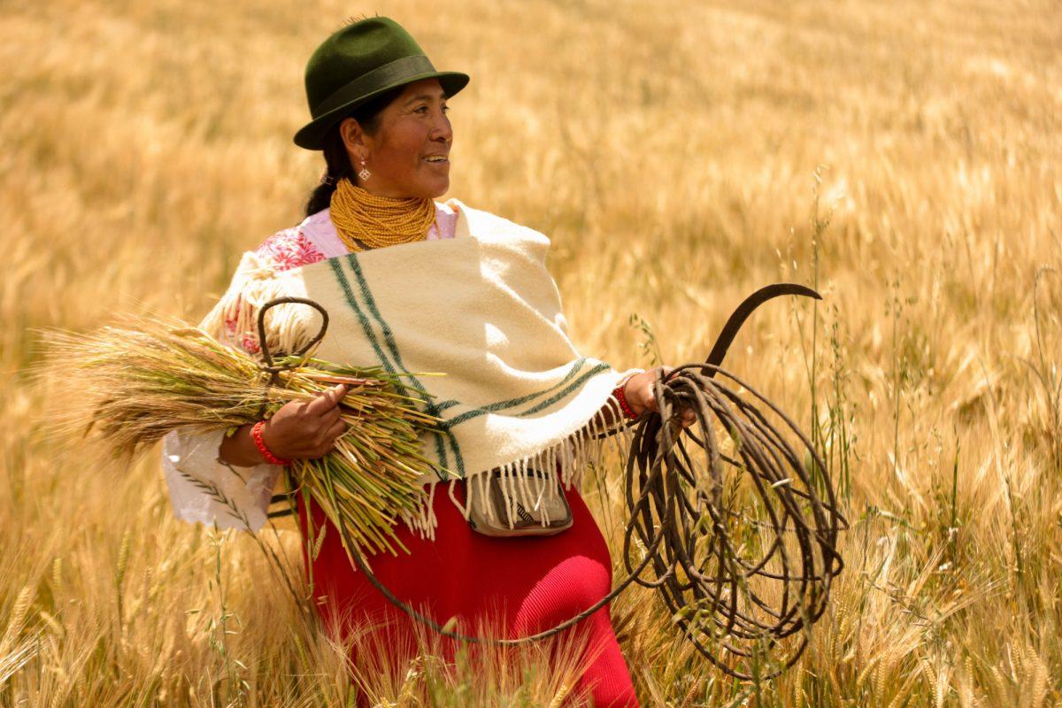 'Nuestra Siembra' tiene ingredientes cultivados por más de 300 agricultores en los campos de diferentes provincias de la sierra central y la costa del Ecuador.