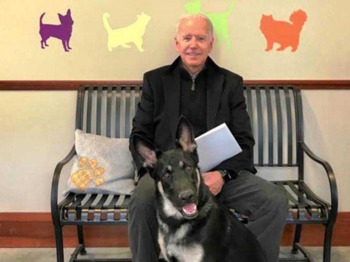 Joe Biden, de 78 años, se hizo daño al resbalarse mientras jugaba con uno de sus dos pastores alemanes, Major.